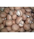 Cogumelos Marron Cat II Granel