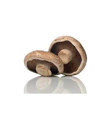 Cogumelos Portobello Cat II Granel